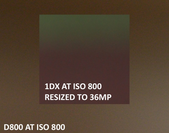 Nikon D800 VS Canon 1DX High ISO Sample Comparison