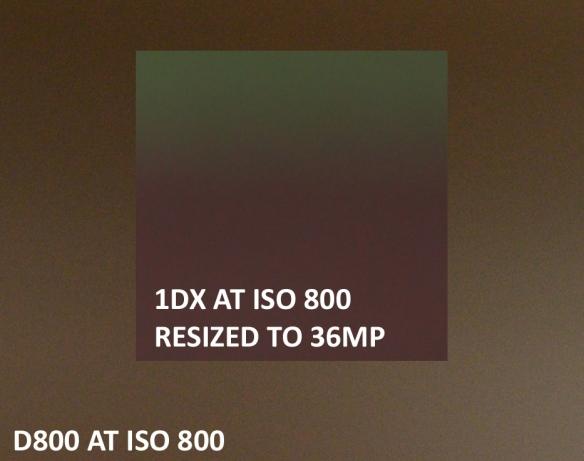Nikon D800 VS Canon 1DX High ISO Sample Comparison